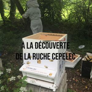 Article reportage à la découverte de la ruche Cepelec